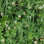 Kip's Korner: Annuals, Perennials & Row Crops