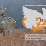 QDMA's Position on Mandatory Antler Restrictions