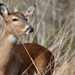 10 Reasons You Don't Want CWD in Your Woods