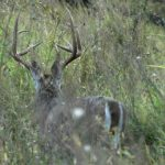 VIDEO: Better Hunting With Early Successional Cover