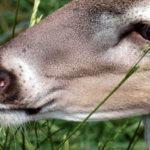 To Kill Mature Bucks, Reveal the Wind
