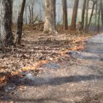 Get Ready to Use Prescribed Fire