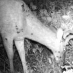 So Your Deer Has Warts. Should You Eat It?
