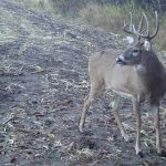 7 Ways to Better Trail-Cam Shots