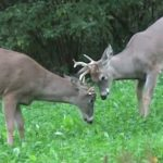 APRs: Why Do So Many Michigan Hunters Like Them?