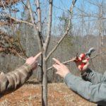 Pruning Wildlife Fruit Trees