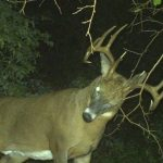 7 Ways to Relocate Missing Bucks