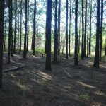Don't Fear the Reaper: Timber Harvest is Good for Deer