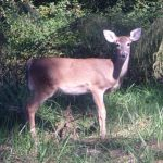 Tanner's Take: Did I Over-Hunt This Stand?