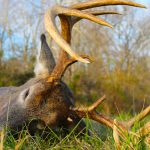 5 Red-Hot Rut Stands for Pressured Deer