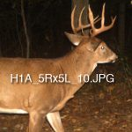 This Trail-Camera Code May Help You Track Bucks