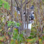 Three Questions Every Deer Forage Expert Asks
