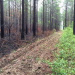 The Best Fire Frequency for Deer Habitat