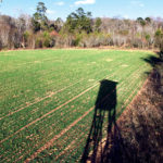 6 Ways Food Plots Are Not Baiting