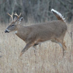 NDA Submits Comments on Arkansas CWD Management and Response Plan