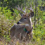 Are Deer Evolving Resistance to CWD?