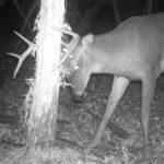 Rub and Repeat: Bucks Return to A Few Rubs, Not All