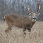 Yes, EHD is Bad. But CWD is Worse