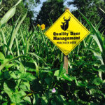 QDMA's Guide to Summer Food Plots