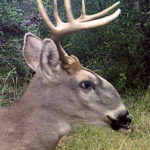 10 Weird Whitetails Join The Freak Deer Collection