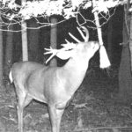 Get Bucks on Camera, No Bait Required