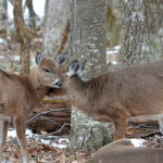 Action Alert: Maine House Paper 321 – Baiting of Deer