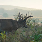 Deer Movement is a Mystery. Stop Trying to Solve It.