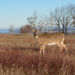 Action Alert: Wisconsin DNR Welcoming Public Comment on Herd Size Objectives and DMU Boundaries