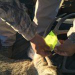 Action Alert: Montana House Bill 108 – Hunting Trespass Laws