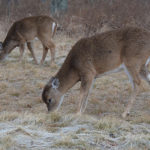 Michigan U.P. Deer Habitat Grant Application Now Open