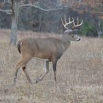 Action Alert: Indiana Deer Management Surveys Now Available