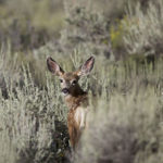 Action Alert: New Mexico Senate Bill 32 – Trapping Ban