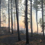 NDA's Guide to Prescribed Fire
