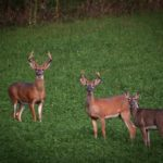 Action Alert: Mississippi House Bill 382 – CWD Sampling of Captive Deer