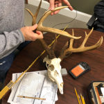 4 Lessons About Antlers and Deer Age from a Simple Chart