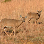 Action Alert: Iowa SF 581 – Deer Population Management