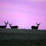 Wisconsin 2021 Deer Season Recommendations Open for Public Comment