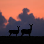 Texas Managed Lands Deer Program (MLDP) Enrollment Now Open