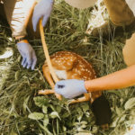 10 Highlights From New Deer Science You Can Use