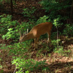 3 Great Spots for Public Land Trail-Cameras