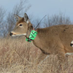 Why Science Matters in Deer Hunting