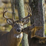 Cold Fronts May Get Hunters On Their Feet, But Bucks Answer a Different Call